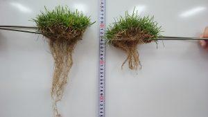 根の発達210607